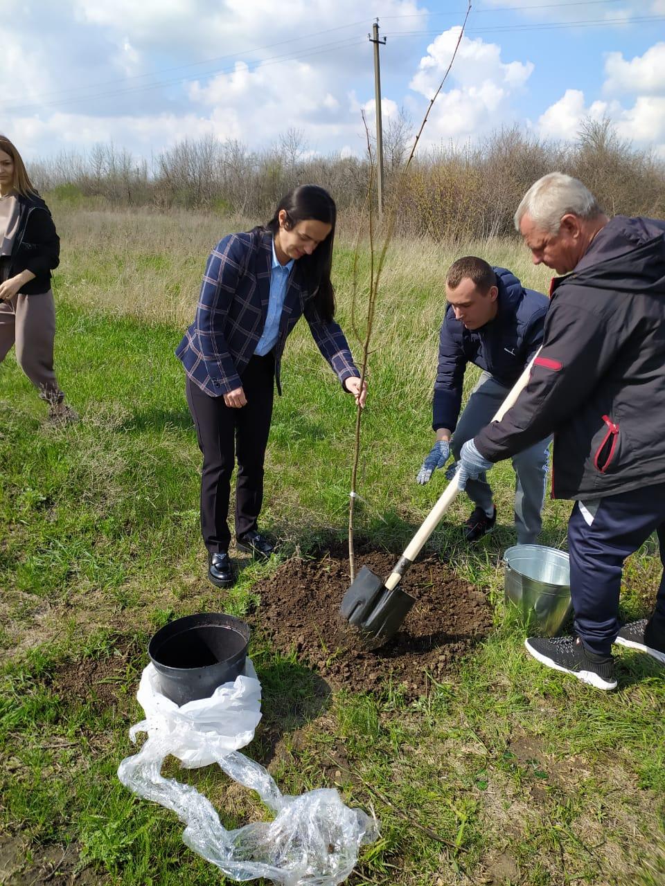 В Миллерово зеленеет аллея Почетных граждан Миллеровского района