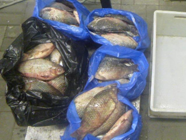 Более 100 килограммов незадекларированной свежей рыбы выявили ростовские таможенники